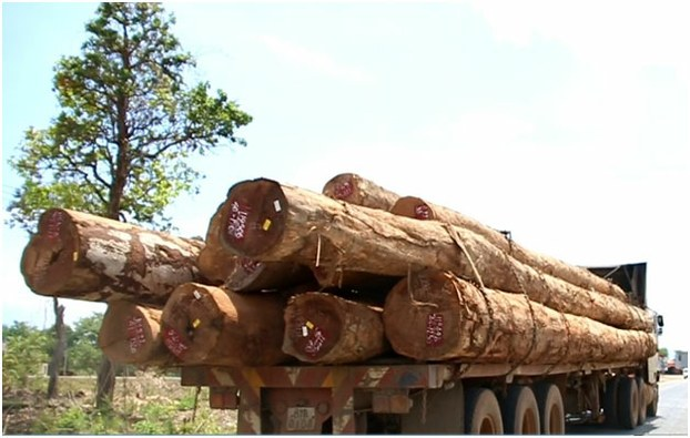 Lao Loggers Backed by Corrupt Officials Pillaged Champassak Forests in July