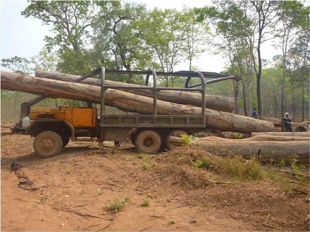 lao-timber